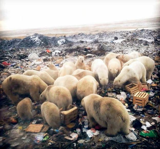 Un grupo de osos en un vertedero de Belushia Guba. A la izquierda, uno en un portal. /Youtube
