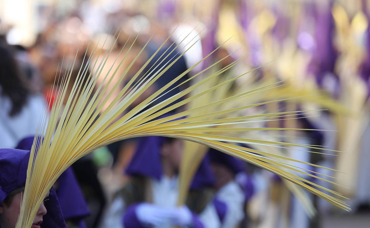 Semana Santa de Málaga   Palmas en los balcones   Diario Sur