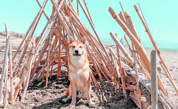 Chincheta, el perro de Rosa Porras posa en la playa de la desembocadura del Guadalhorce.